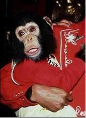 bubbles_the_chimpanzee