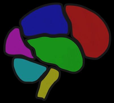 brain7