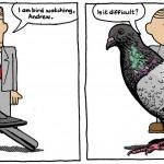 amusingbird
